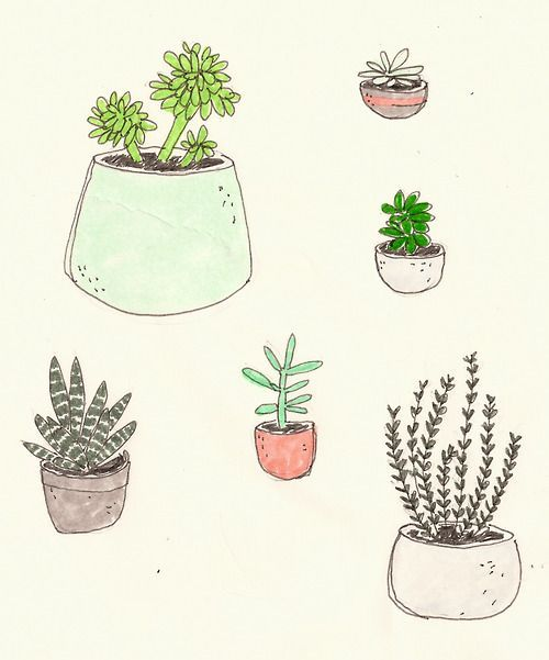 Tumblr clipart succulent. Plants drawing google search