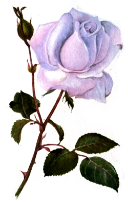 Tumblr roses png. Flowers