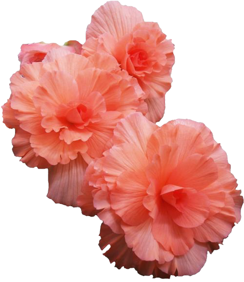 Flowers tumblr png. Pink transparent image mix