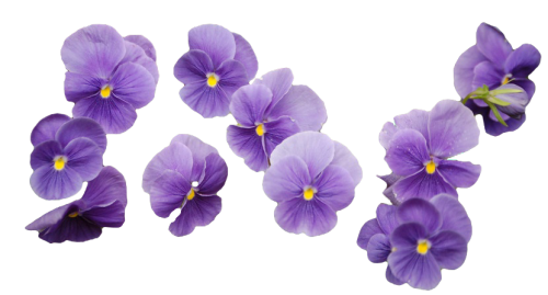 Tumblr png flowers. Image dumbledore s army