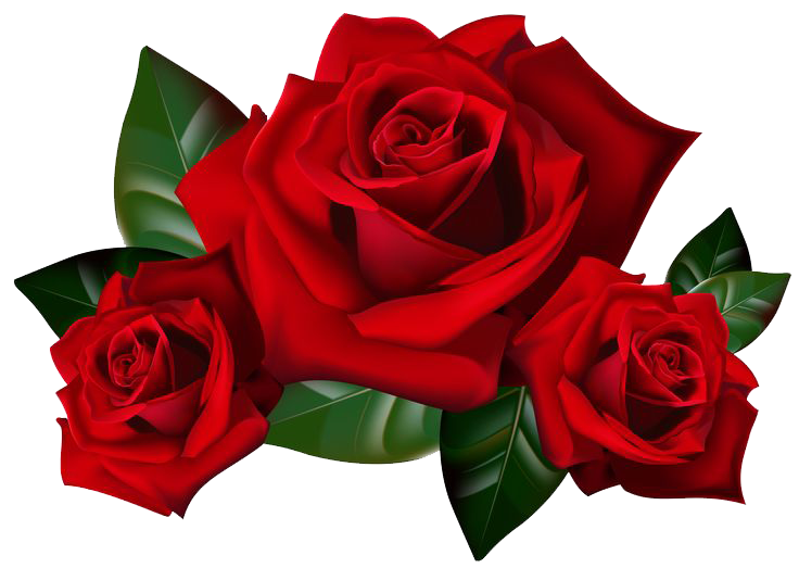 Transparent images all. Rose .png png picture transparent download