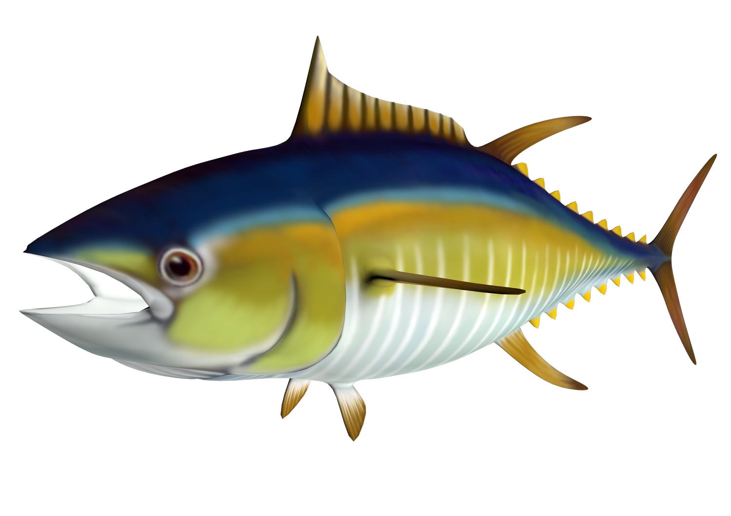 Free cliparts download clip. Tuna clipart jpg freeuse stock
