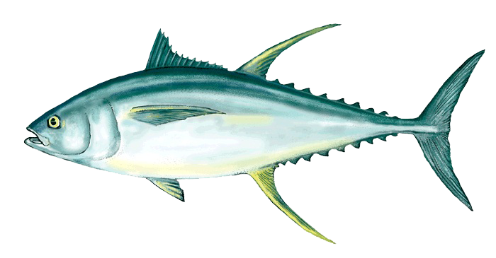 Ahi png peoplepng com. Tuna clipart picture free