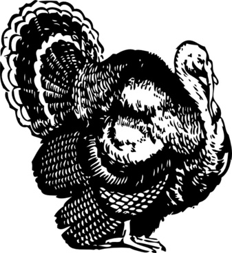 Free vector image download. Turkey clip art realistic jpg black and white library