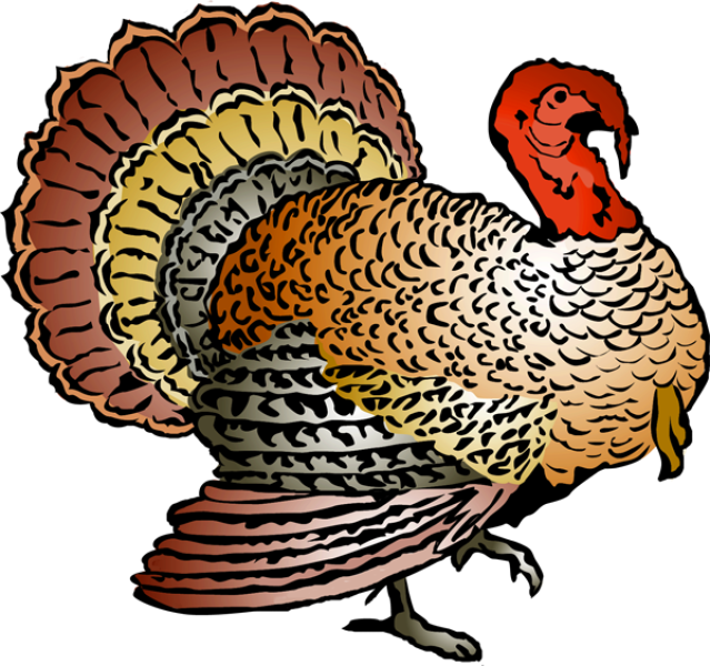 Turkey clip art realistic. Free download on clipart