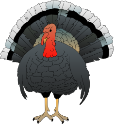 Turkey clip art realistic. Free to use public