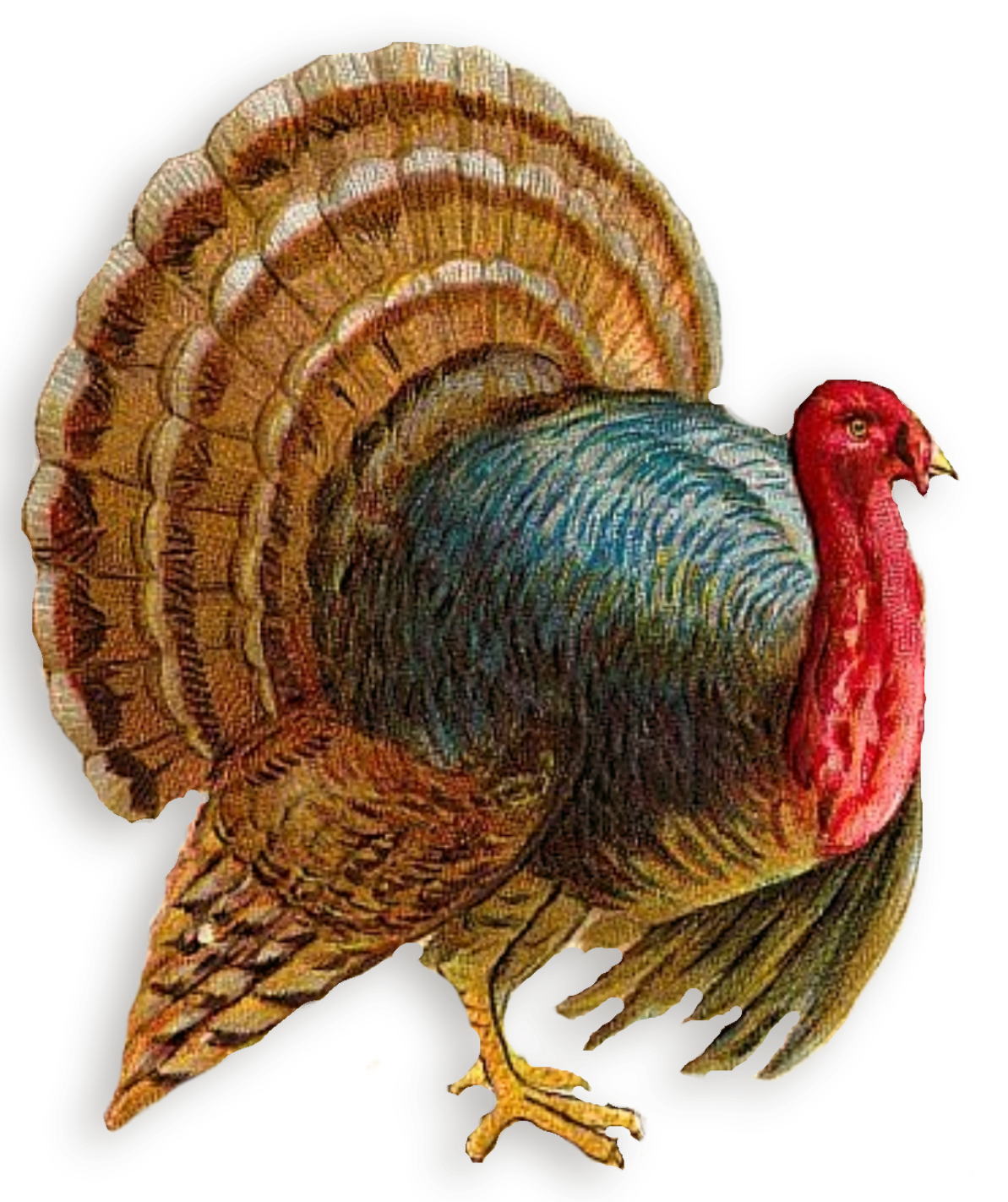Png turkey. Clipart best free icons