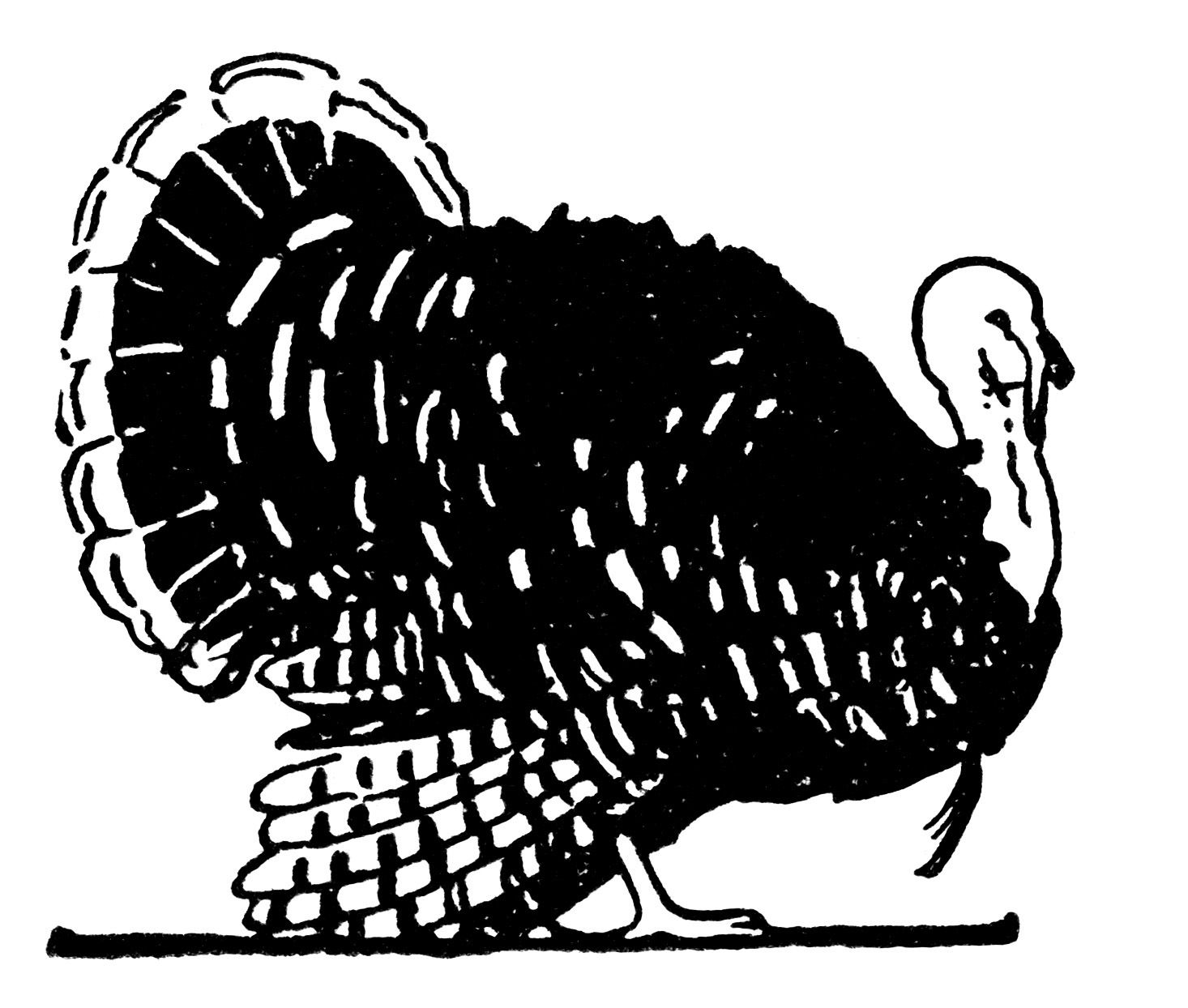 Turkey clip art wild turkey. Thanksgiving vintage illustration black