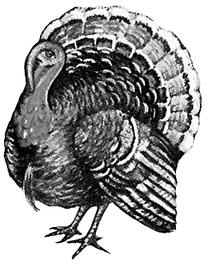 Turkey clip art wild turkey. Pictures and drawing of