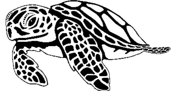 Art on clip shells. Turtle clipart hawksbill turtle clip art freeuse download