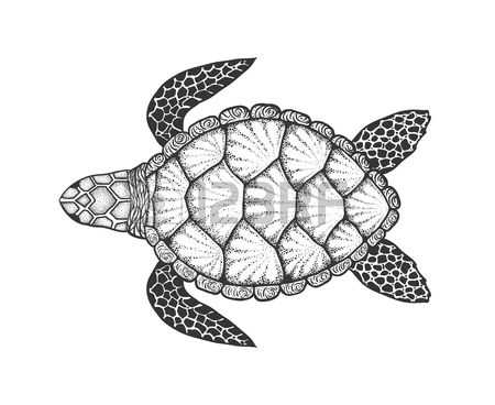 Loggerhead sea drawing at. Turtle clipart hawksbill turtle svg black and white