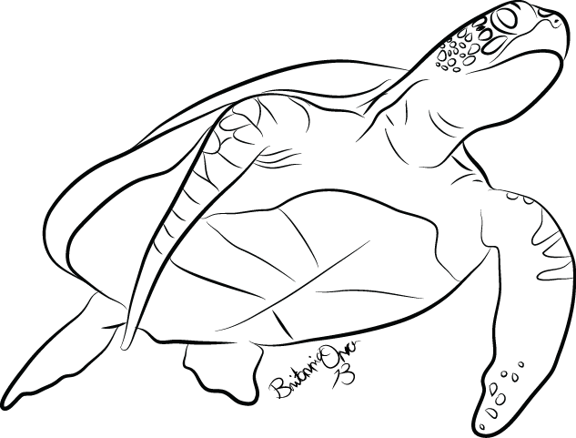Turtle drawing png. Sea lineart by britannia