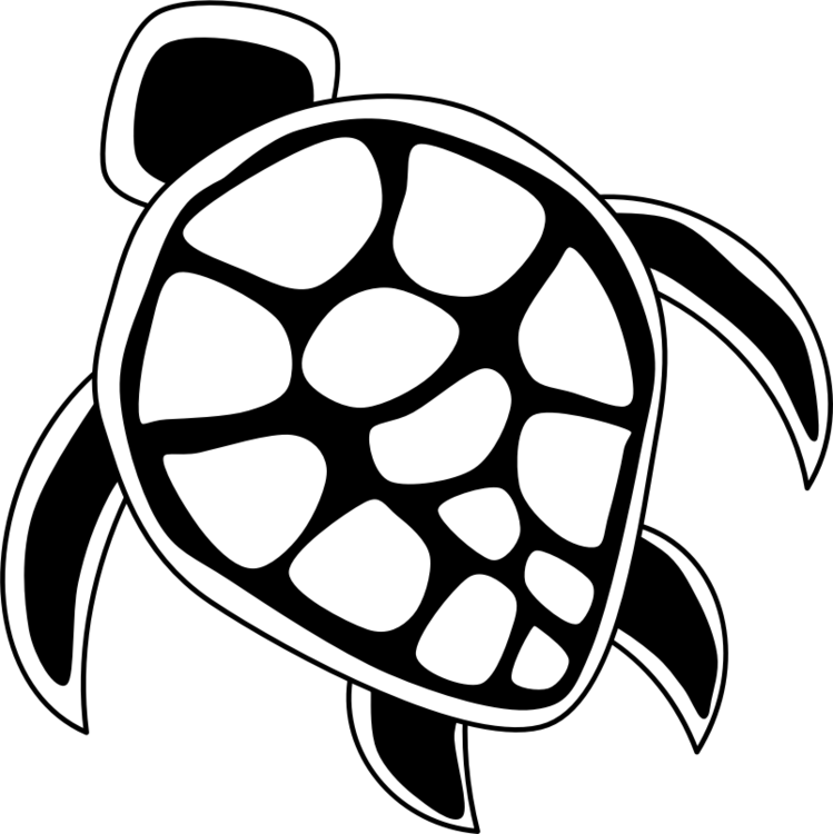 Turtle drawing png. Green sea the free