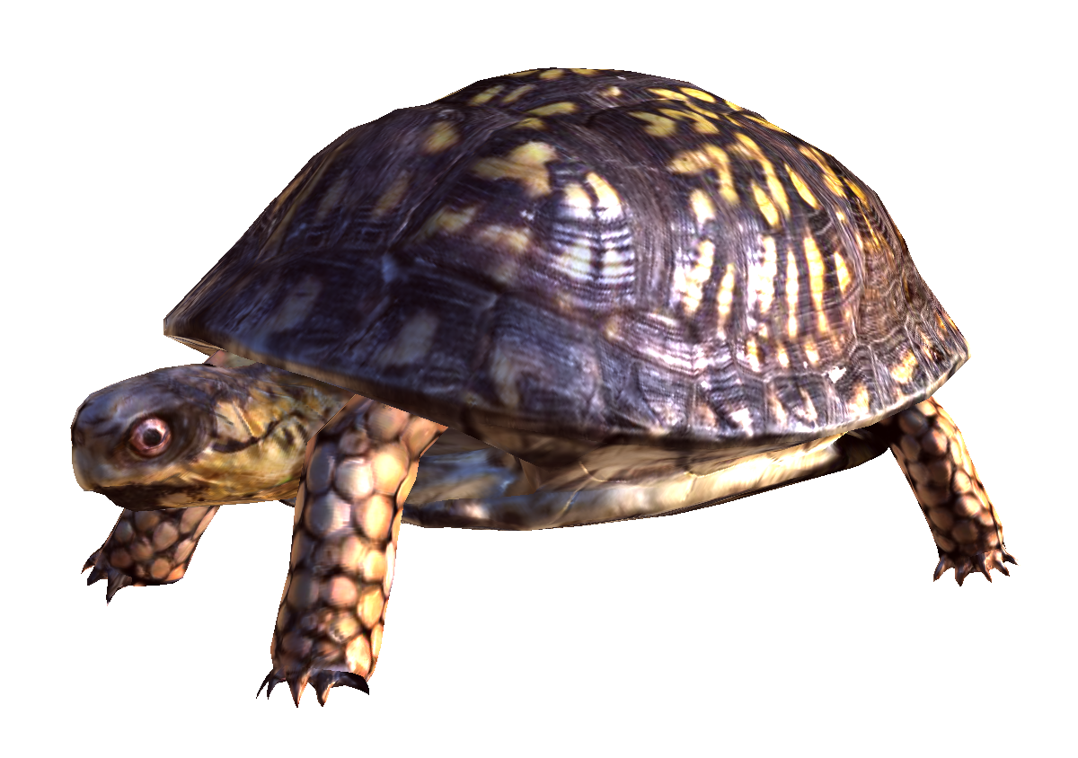 Turtle png. Transparent pictures free icons