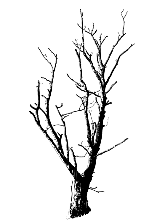 Twig drawing detailed. Black and white branch