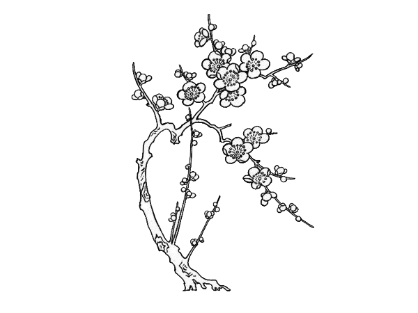 Twig drawing line. Paper art cherry blossom