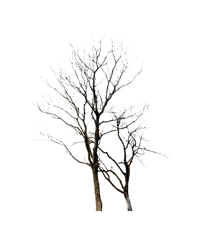 Twig drawing winter. Tree plant transprent png