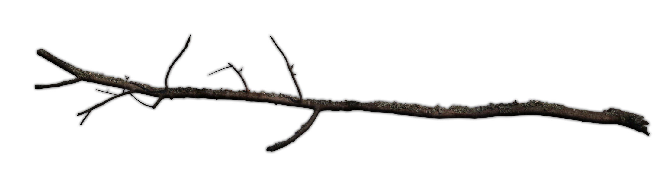 Twig stick png. Branch google trees and