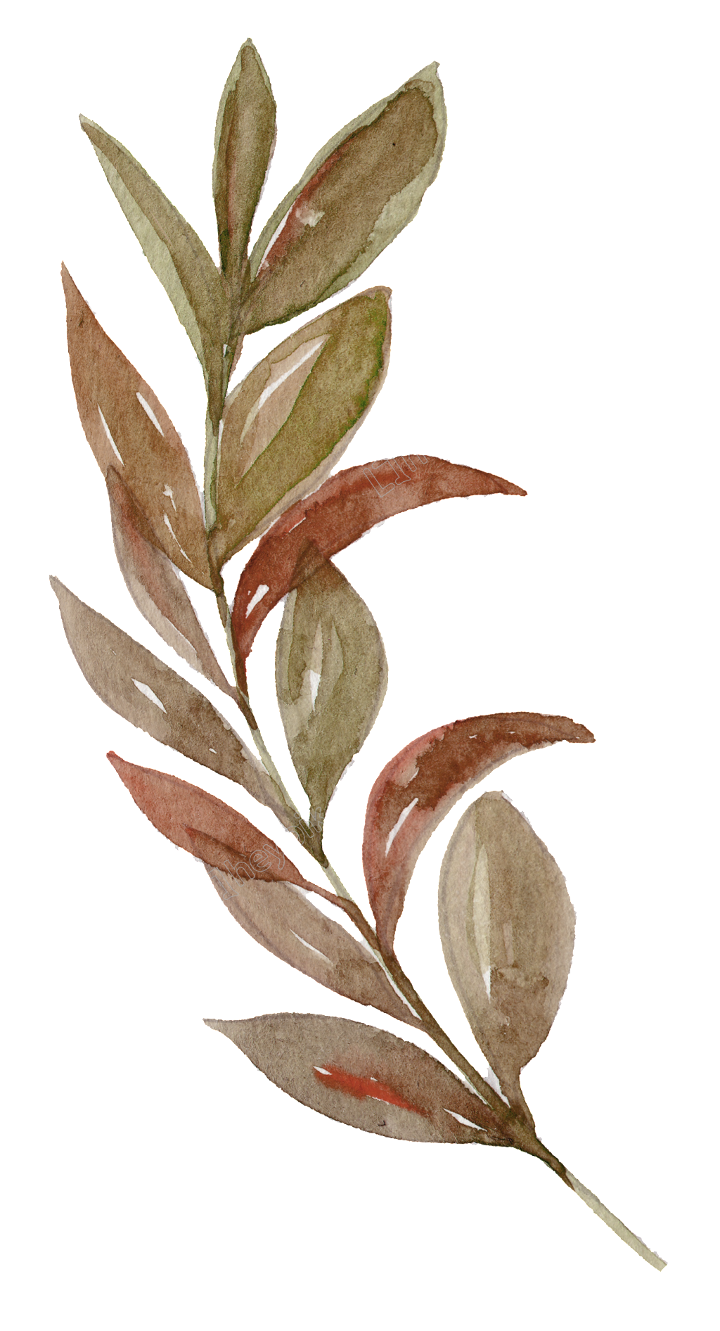 Twig vector. A hand painted brown