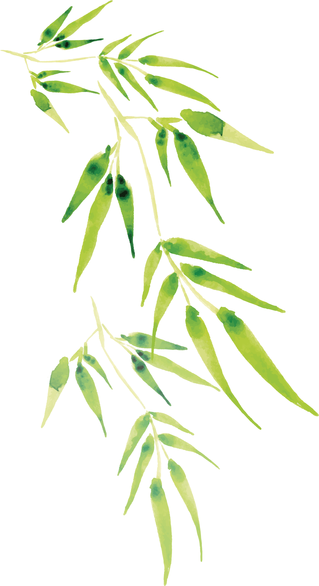 Cartoon bamboo transprent png. Twig vector picture library library