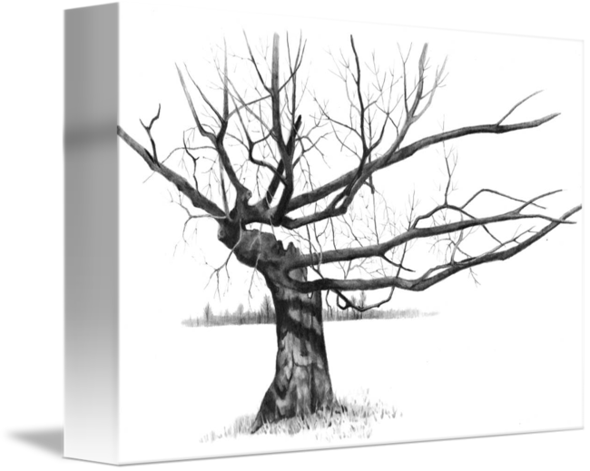 Twisted drawing. Tree with gnarled bare