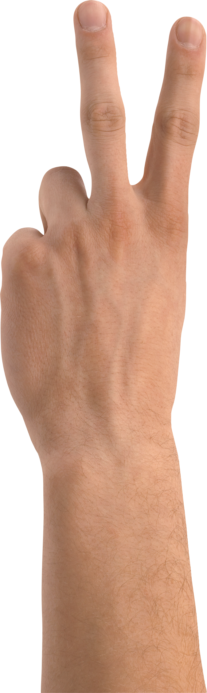 Two hands png. Transparent images pluspng hand