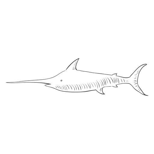Typographic drawing shark. Hand drawn transparent png