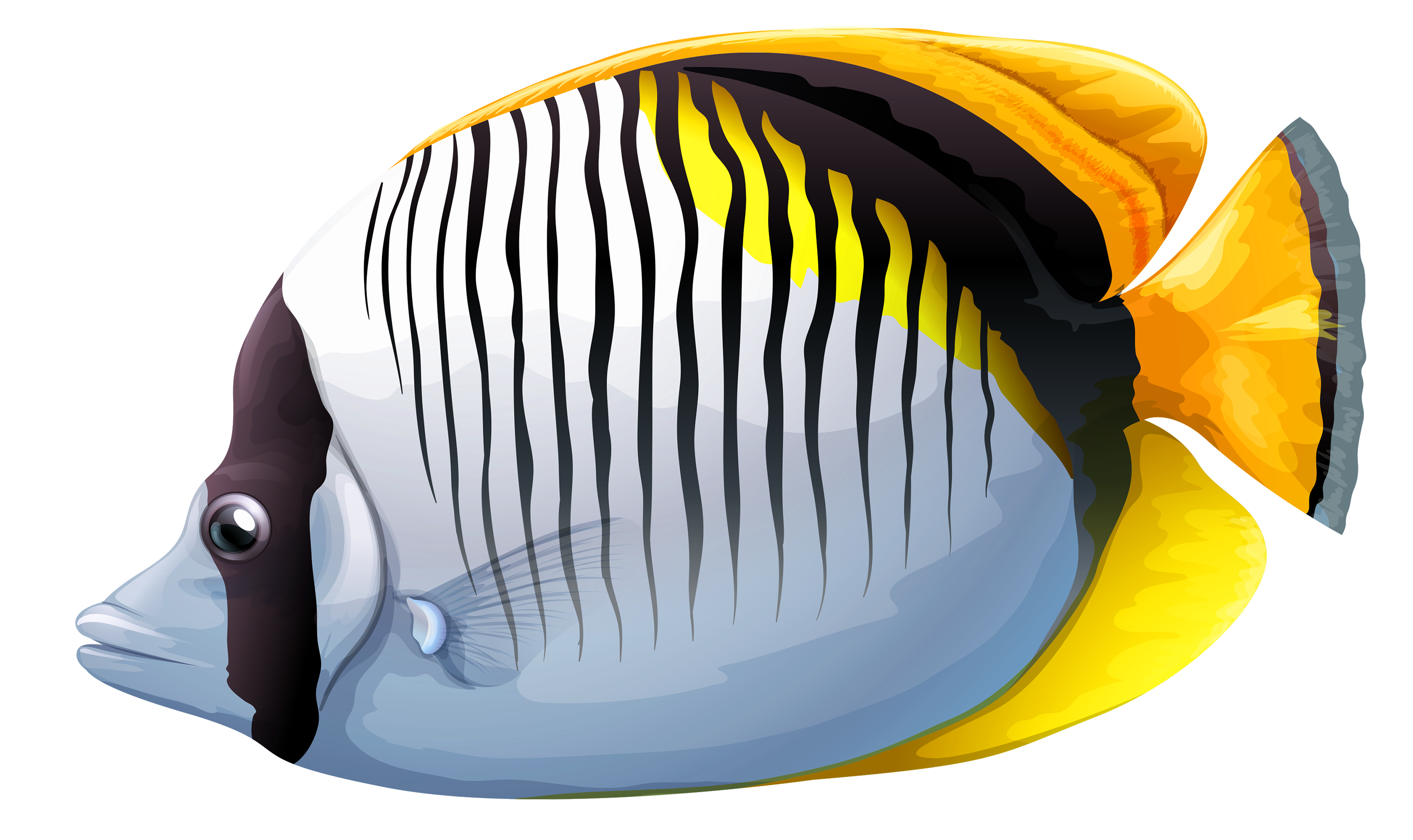 Chaetodon fish png image. Underwater clipart jpg black and white