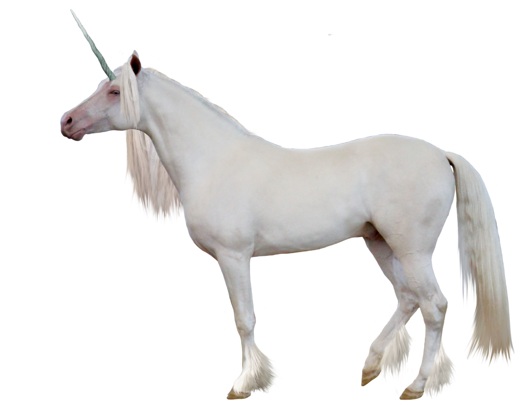 Unicorn .png. Png images free download