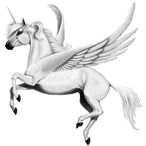 Unicorns transparent winged. Asma unicorn arabian horse