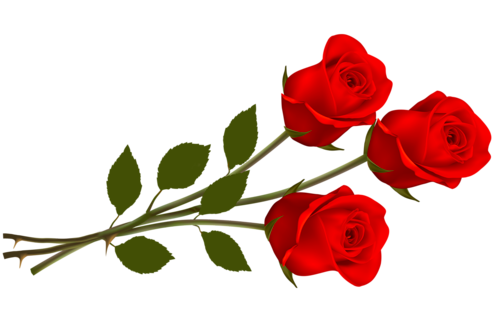 Valentine rose png. Red collection trasnsparent images