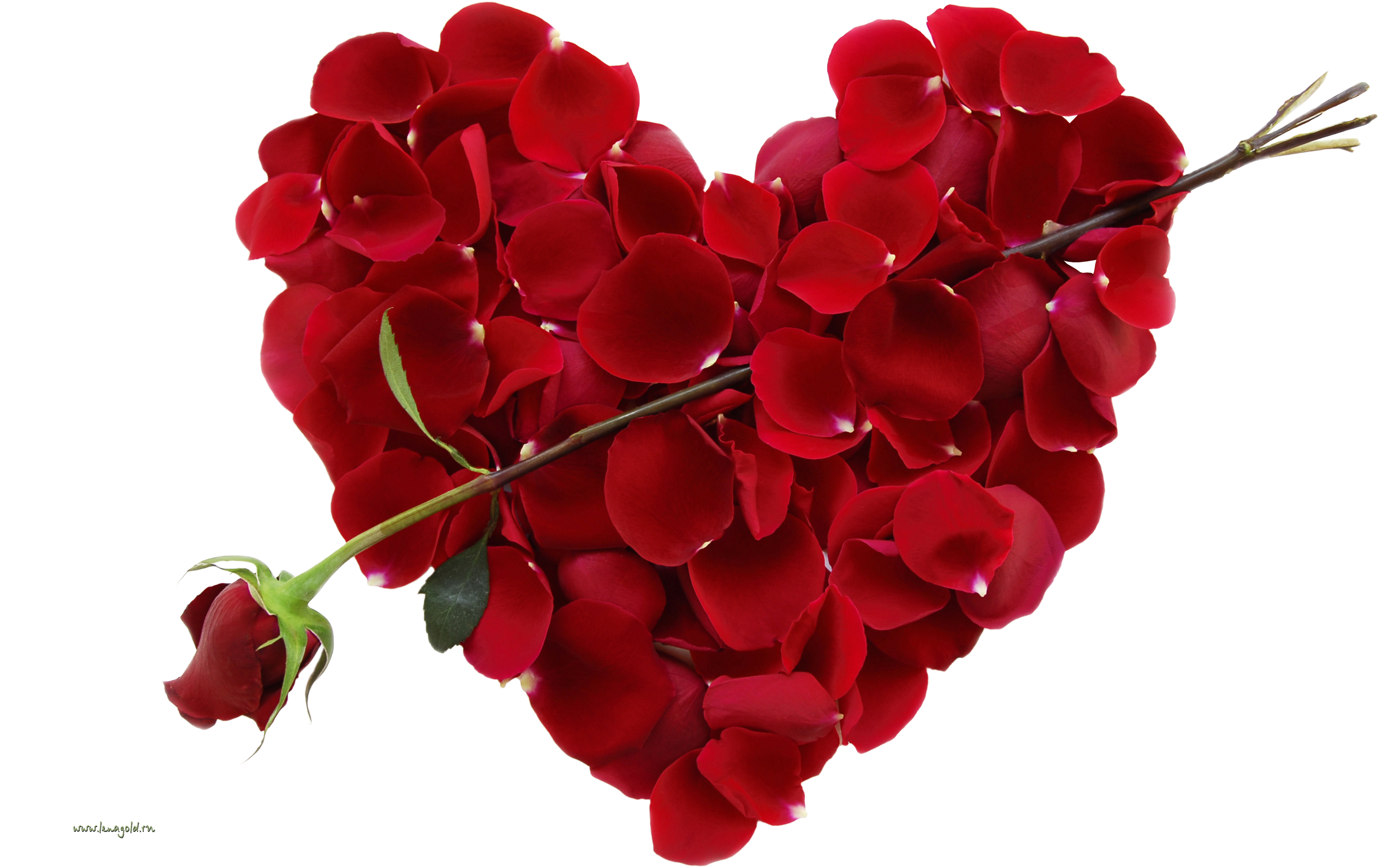 Valentines flowers png. Rose love day
