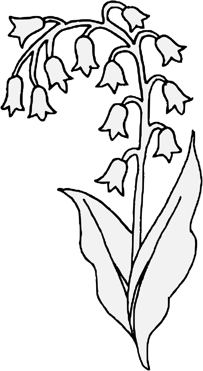 Valley vector black and white. Lily of the flower