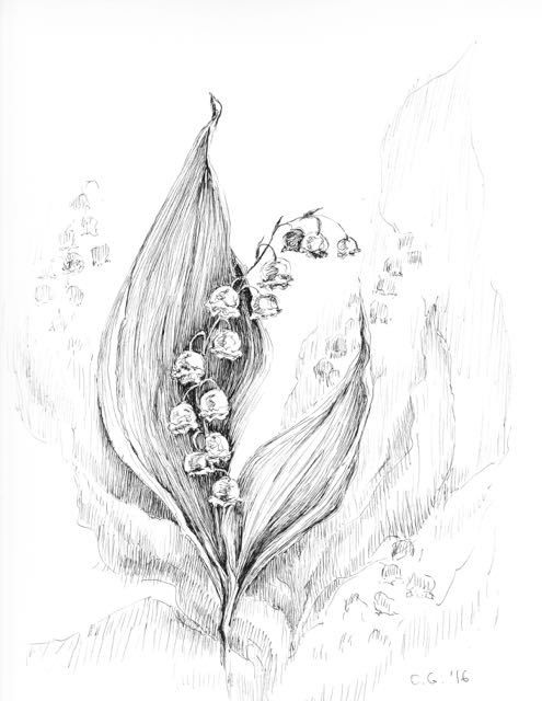 Valley clipart sketch. Lily of the art