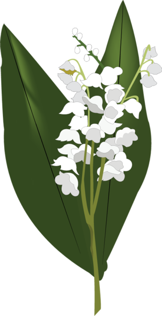 Valley vector lily. Of the png hd