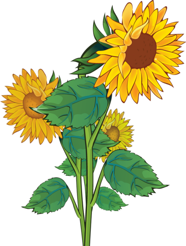 Sunflower clipart flower. Valley cliparts free download