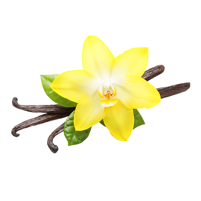Vanilla flower png. Grace luxury perfume from