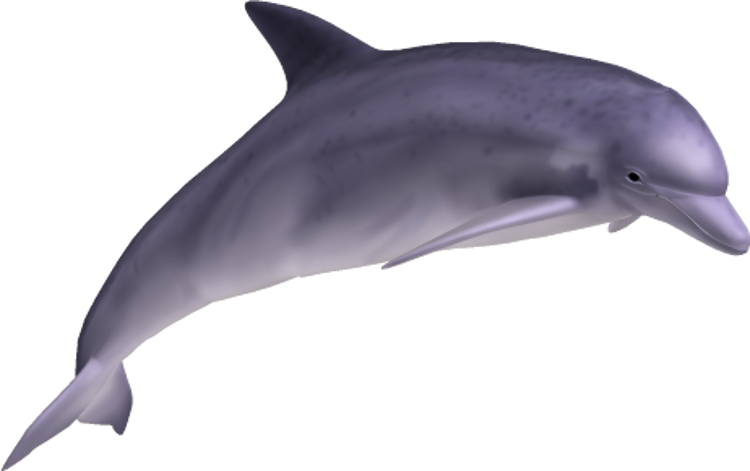 Transparent bg dolphin. Png free images only