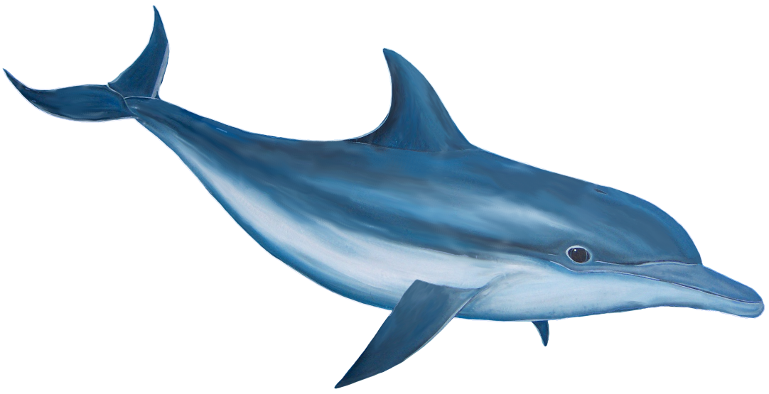 Vaporwave dolphin png. Transparent free images only