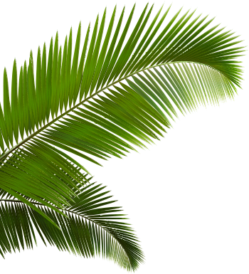 Vaporwave palm tree png. Ftestickers sticker by report
