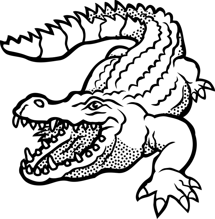 Vector alligator channel. Giraffe owl coloring book jpg library download