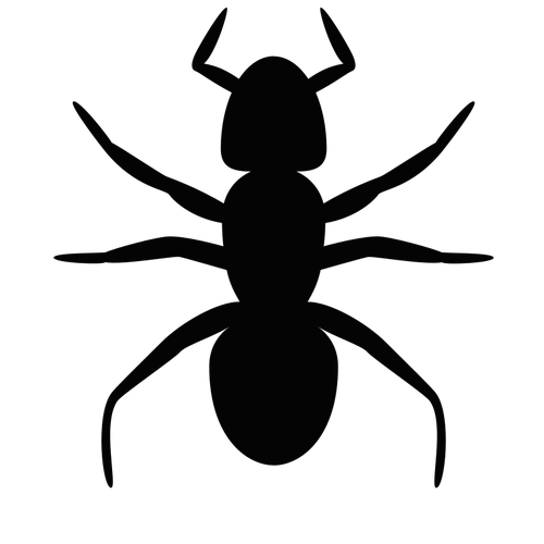 Vector ant top view. Insect silhouette at getdrawings