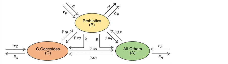 Vector bacteria probiotic. Understanding the competitive and
