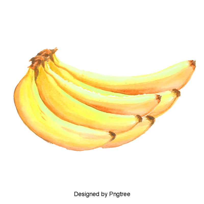 Vector banana. Fruit watercolor fruitwatercolorbanana png
