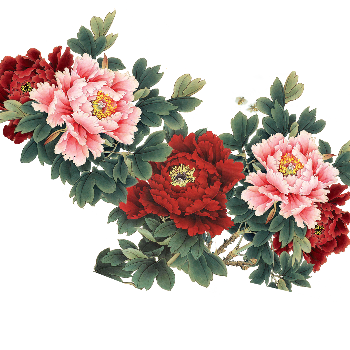 Vector bouquet peony. Free flowers pictures download
