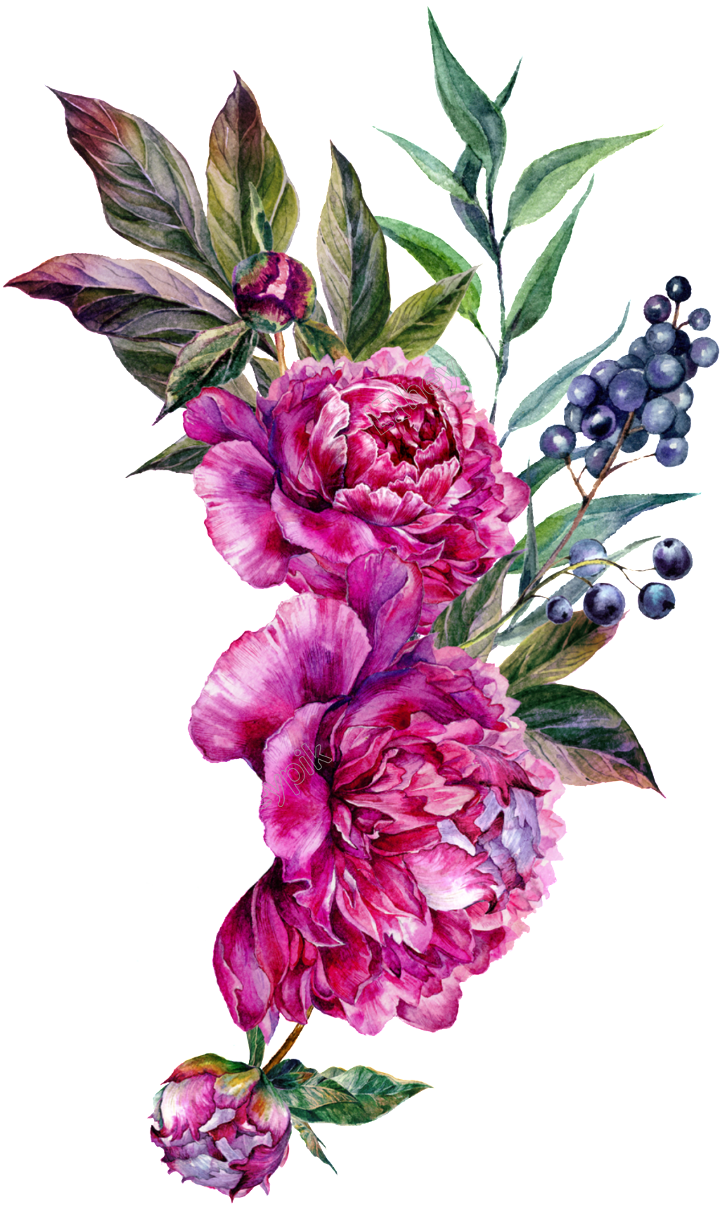 Free download eps files. Vector bouquet peony image download