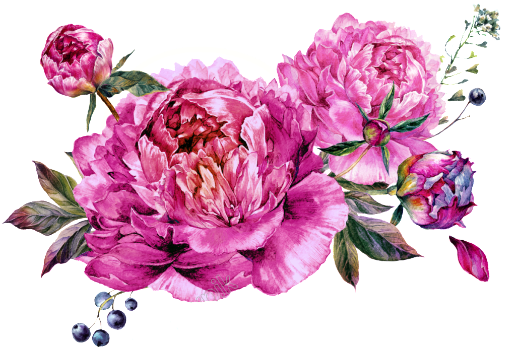 Vector bouquet peony. Free download eps files