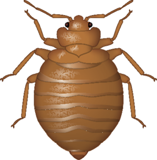 Vector parasite bed bug. Png transparent image clipart