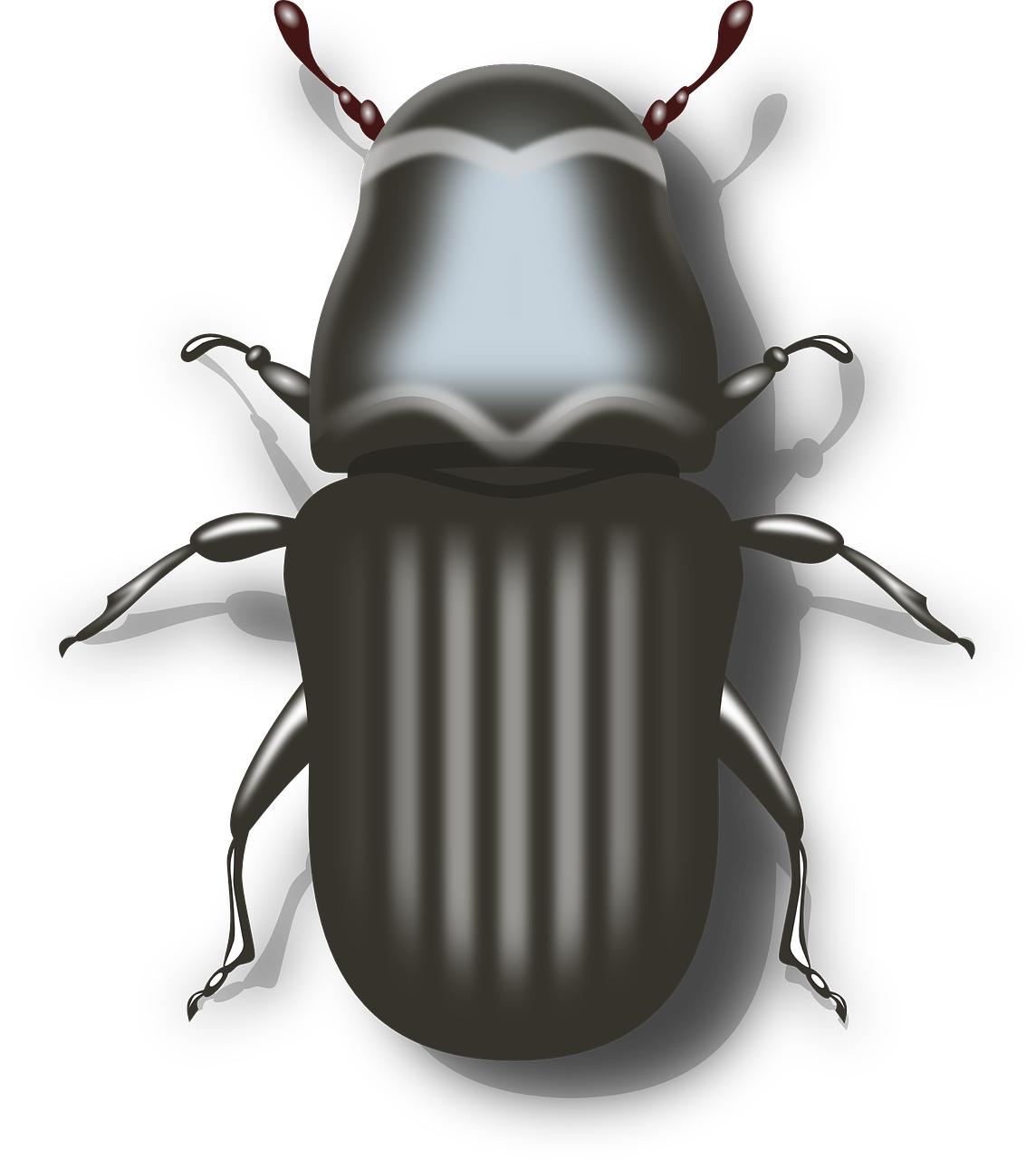 Vector bug beetle. Insect grey pest free