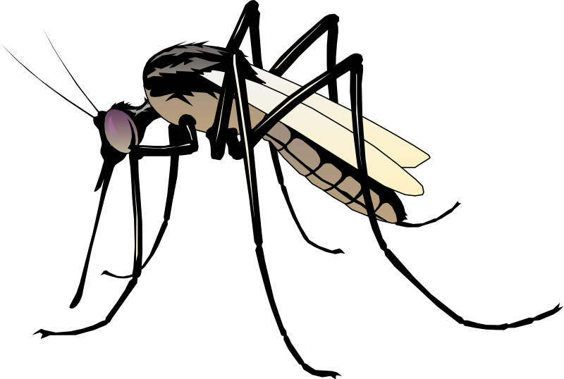 Maine vector simple. Insect the detail of